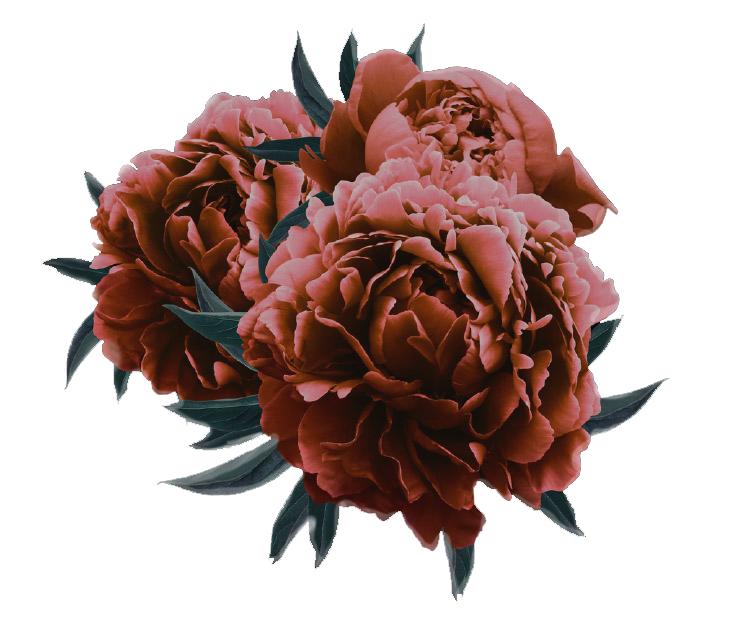 bloem onnys